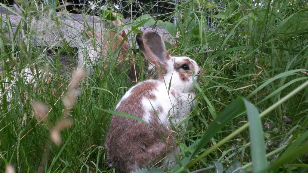 Kaninchen, Hofladen, Bauernhof, Rodewisch